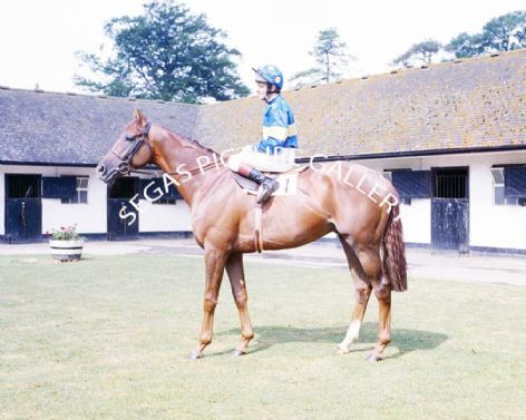 Racehorse Patch with Jockey Pat Eddery